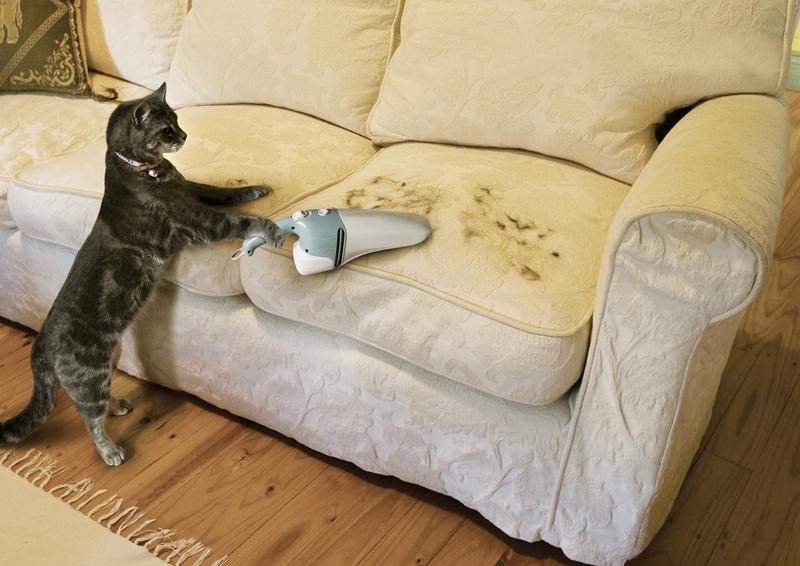 Porszívózó macska